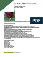 GALINHAS - RAÇAS E CARACTERÍSTICAS