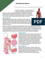 Muscular System.pdf