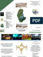 Triptico Biologia Ecologia 2012