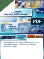 91900882 Seminario de Actinomicetos