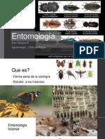 Entomología