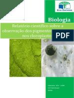 Relatório científico sobre a observação dos pigmentos existentes nos cloroplastos