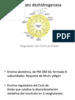 Isocitrato deshidrogenasa