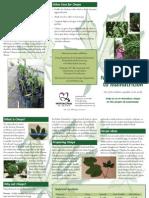 Chaya Brochure