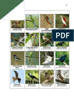 indiabirds2.docx