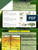 Tema 3 Estructura Plantas II