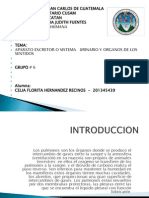 Diapositovas Del Aparato Excretor