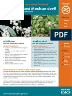 biosecurity factsheet 25 - mistflower and mexican devil