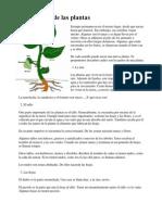 Los órganos de las plantas.docx