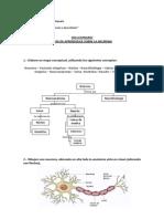 SOLUCIONARIO_Gu+¡a de Aprendizaje La Neurona