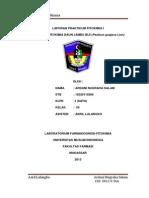 Ardani Fito Print
