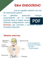 el sistema endocrino 2