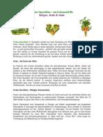 Grüne-Smoothies-Artikel
