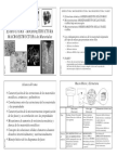 MMEstructuras2006_4pp