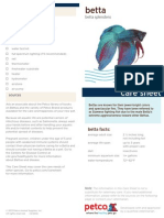 Betta care sheet