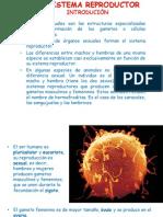 el sistema reproductor2