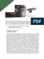 ZIMSKE-GLJIVE.pdf
