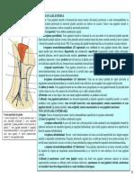 SECTIUNEA 11 VENELE SUPERFICIALE ALE GATULUI PLEXUL CERVICAL.pdf