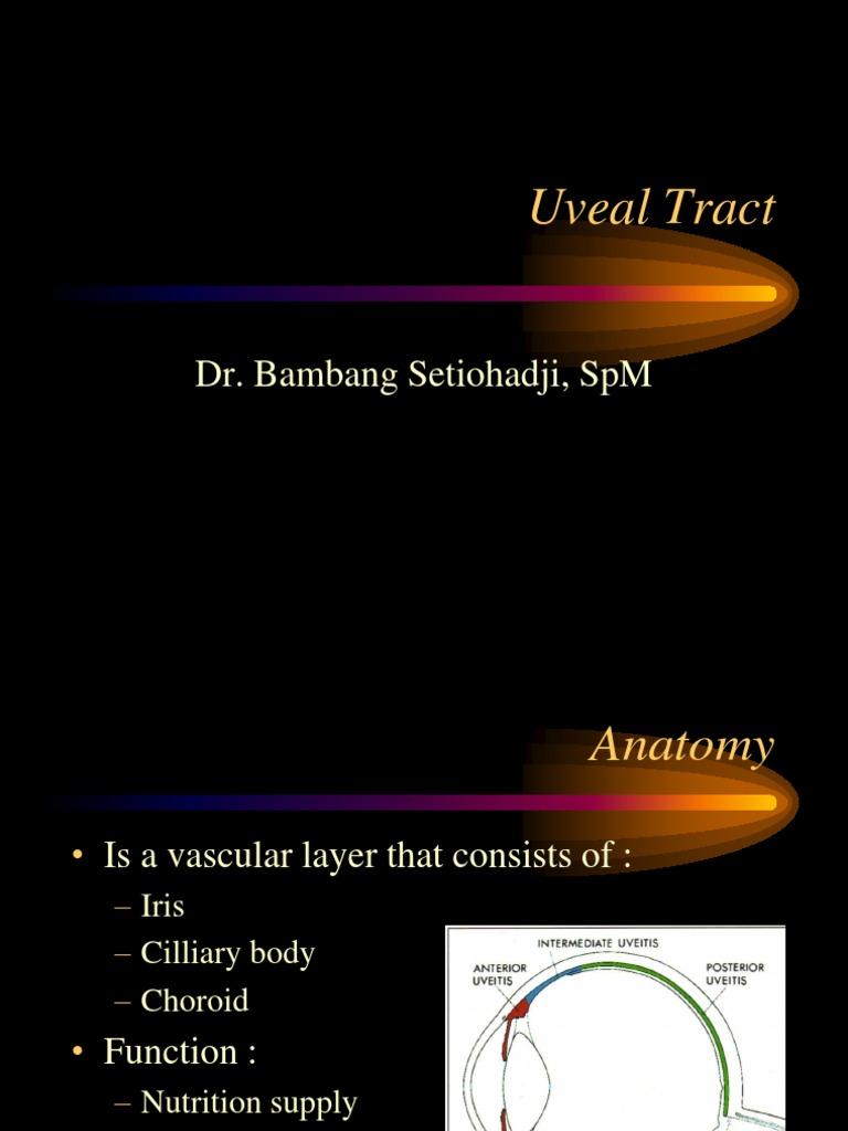 Uvea.ppt | Human Eye | Ophthalmology