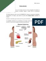 11) Sistema Endocrino I