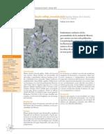 Moricandia-moricandioides-pseudofoetida