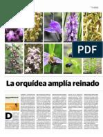 La Orquidea Amplia Reinado