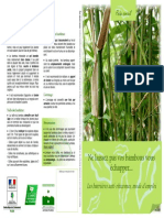 Bambou Fiche Conseil
