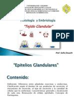 2 Clase Tejido Glandular-Sofia