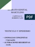 3testiculo-1233968441228881-1