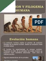Evolucion y Filogenia Humana Diapositivas Gloria Elsa
