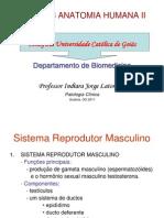 Sistema Reprodutor e Histologia