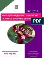 G2.5 Fe y Mn. Hierro y manganeso. Funciones en la Planta y Síntomas de Deficiencia.