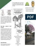 Pasos Para Una Correcta Arborizacion