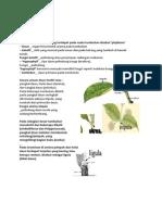Struktur dan fungsi daun.docx