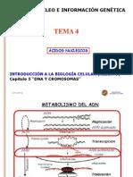 Tema 4 Ácidos Nucleicos.ppt