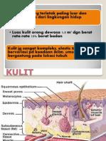 anatomi kulit winda.ppt