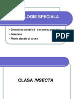 CLASA INSECTA