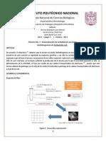 Práctica 3 Succinato deshidrogenasa