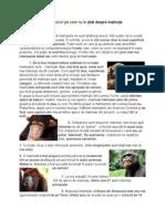 20 de lucruri pe care nu le știai despre maimuțe