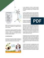 Valores Institucionales.pdf 2