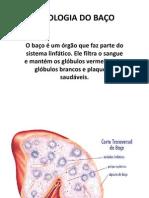 Fisiologia do Baço2 (1)