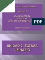 SEMIOLOGIA APARATO GENITOURINARIO