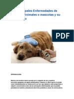 Las Principales Enfermedades de nuestros Animales o mascotas y su tratamiento