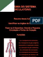 Aula 4 Anatomia do Aparelho Circulatório