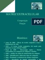 Aula 3. Matriz Extracelular
