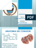 Cardiovascular - Copia