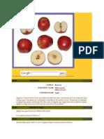 fruits.docx