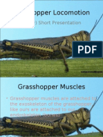 Grasshopper Locomotion