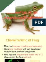 Locomotion in an Amphibian