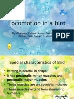 Locomotion in a Bird
